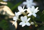 Lekovito bilje u prirodnoj kozmetici 2