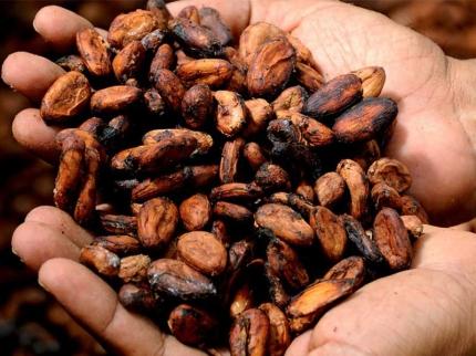 Zašto da odaberete kakao za negu kože?